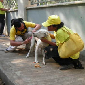 Vaccination and Rabies Eradication